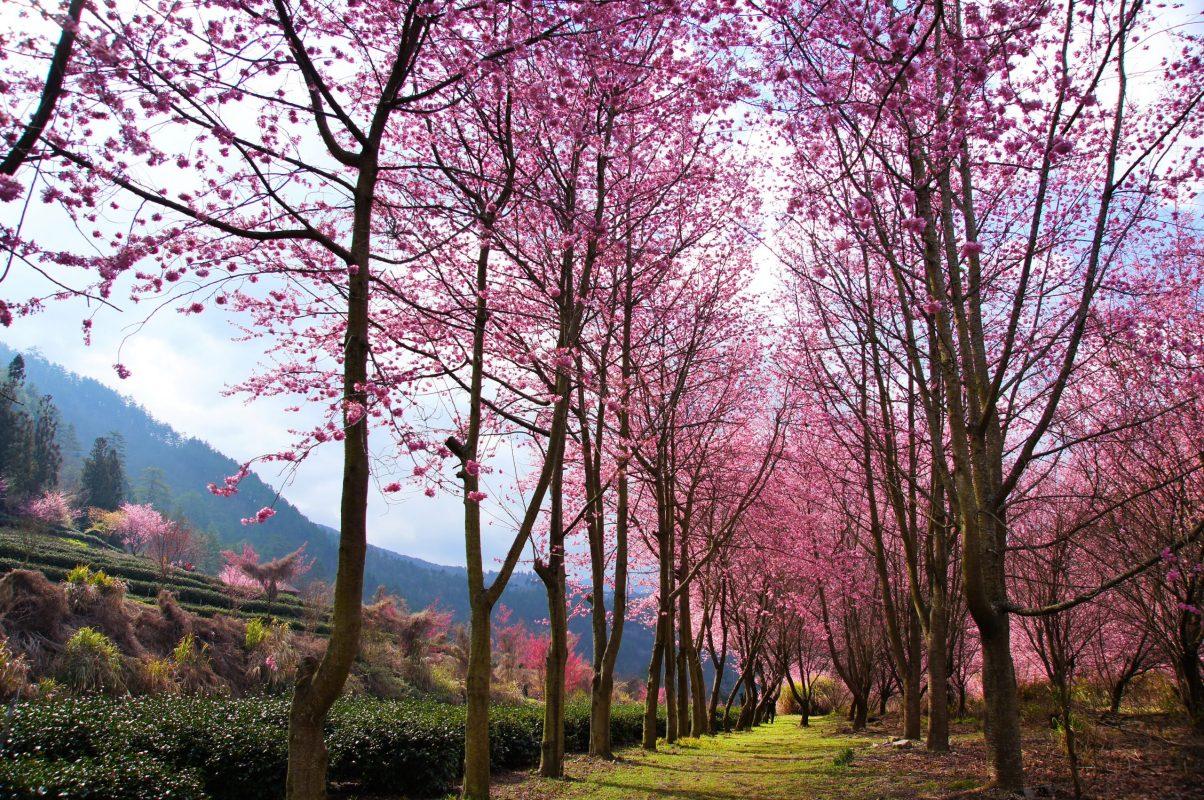 primavera perfetta enrico brizzi
