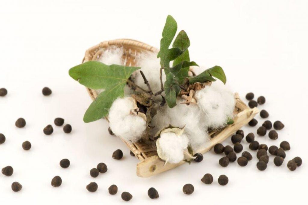 Olio di cotone nocciolo